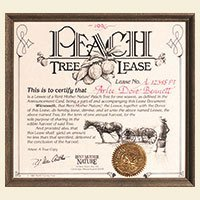 Rent Mother Nature Peach Tree Lease