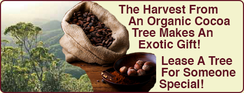 Promotion-Organic-Cocoa-Tree-Lease